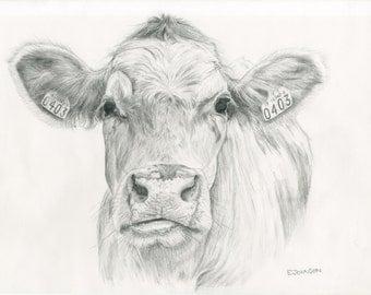 Cow - Pencil Limited Edition A3 Giclée print - 'Daisy'