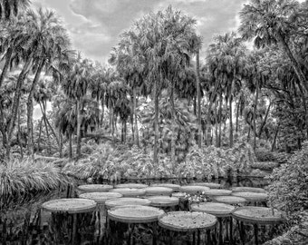 Giant Water Lilly Pond Clearing