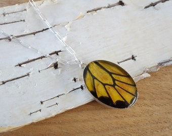 Real Butterfly Wing Necklace, Yellow Birdwing