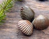 Handmade Porcelain Seashell Shank Button Set of 3