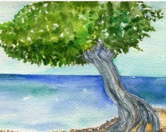 Divi Tree, Aruba original watercolor painting, ocean art, seascape watercolor, 4 x 6