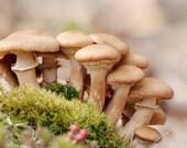 Nature Photograph, Mushroom Print, Nature Art, Woodland Art, Mushroom Art Print, Earthy Home Decor Print
