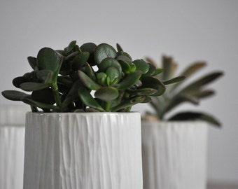 Small Birch Planter -  Modern Ceramic Indoor Planter White Modern Ceramic Small Succulent Planter