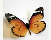 NEW YEAR SALE 6 x 3D Natural Transparent Butterflies for use in Decorating or as a Craft Supply