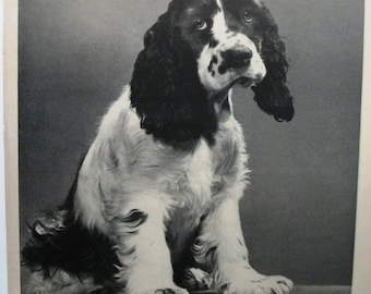 """Pets ... 120  """"Spaniel for Bell Telephone System"""" Ad   -  November 1954"""