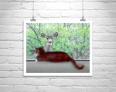 Cat Photography, Cat Print, Cat Picture, Cat Art, Deer Art, Wildlife, Cute Animals, 8 x 10, 11 x 14, Murray Bolesta, MurrayBolesta