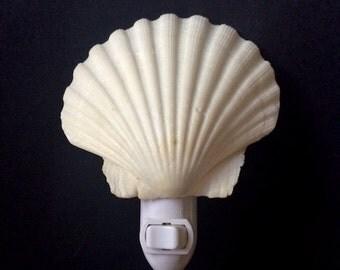 Natural Shell Night Light