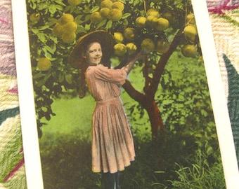 vintage Florida postcard antique 1910s girl picking grapefruit souvenir divided back