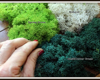 Terrarium moss-Reindeer moss-Lichen Sample bag 1 Oz. Bag Preserved Lichens in many colors-Preserved Moss-No watering needed