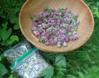 red clover blossoms - organic