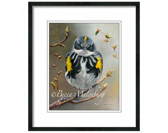 warbler art PRINT yellow-rumped warbler wildlife fine art bird