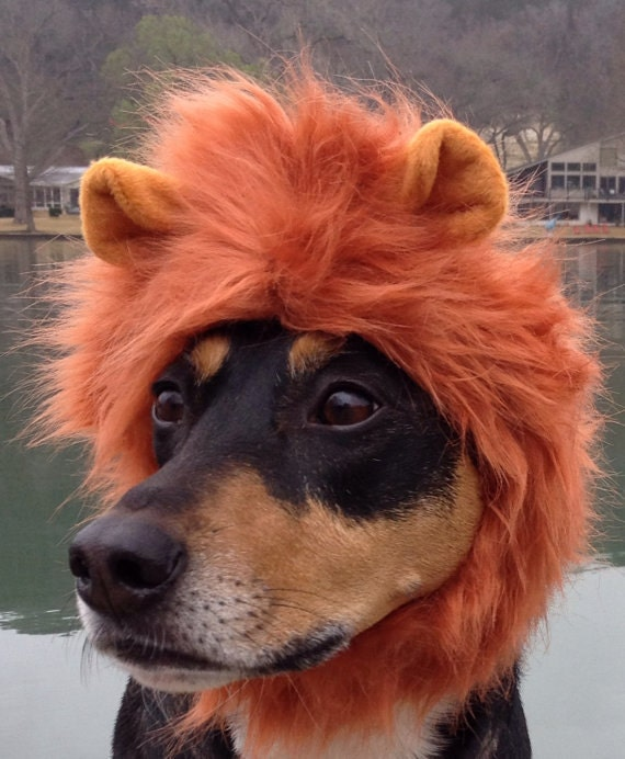 Lion Mane for Dogs and cats in signature hat box