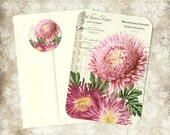 Note Cards, Set of 4, Chrysanthemums, Flower Note cards, Flower Stickers, Gift Set