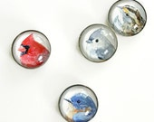 Bird magnets, set of 4 watercolor art magnets, glass refrigerator magnets