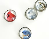 Bird magnets, set of 4 watercolor art magnets, glass refridgerator magnets