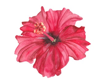 Red Hibiscus Watercolour Illustration