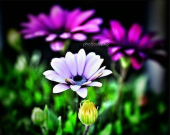 "8"" x 10"" Fine Art Tropical Flower Photographic Print"