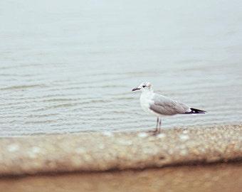 Seagull Photography.  Affordable Fine Art Print. Lake Ponchartrain, Nature, Seawall, Water