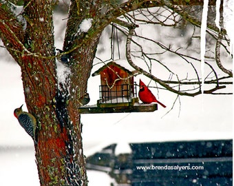 Kentucky Morehead, Woodpecker in Tree Giclee Print on Fine Art Paper or Canvas