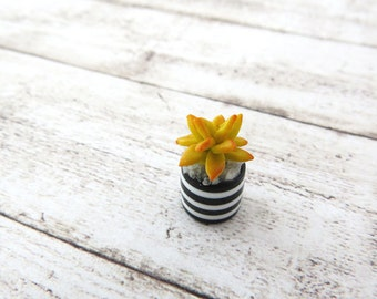 Yellow Echeveria agavoides in striped vase for dollhouse in 1:12 scale