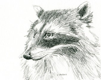 Sketch of a Racoon - 4 x 6 Art for Sale