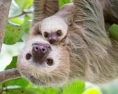 Baby Animal Nursery Decor...