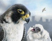 Peregrines Over Pittsburgh