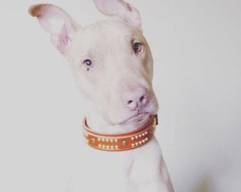 Leather Dog Collar for Pitbulls - Handmade Dog Collar Leather - Custom Leather Dog Collar, Brass Dog Collar Leather for Strong Dogs Collar