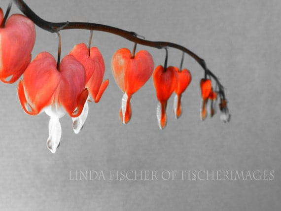 Red Hearts Flower Wall Art Photo Print Fine Art Photography