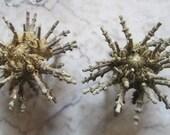 Sputnik Sea Urchin Specimen Set - SHIP FREE