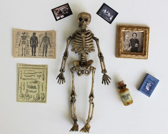 Miniature Skeleton With  Extras for 1:12 Scale Mad Scientist or Medical Classroom or Laboratory