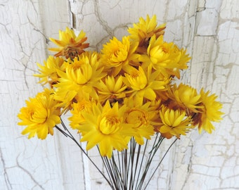 Dried Flowers Straw Flowers Bouquets 30 Yellow Stem Wired by Hand Painted Brown Wire Floral Supply Strawflowers Crafts From Our Garden