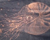 Nautilus - Handmade Animal Shirt - Bleach Painted - Made to Order - Custom Gift - Ocean Animals