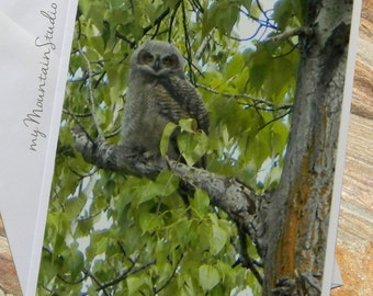 Immature Great Horned Owl Photo Note Card. Handmade. Wildlife Photography. Bird Note Card. Montana Nature Photography.
