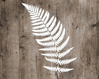 Fern No.1 Vinyl Sticker car decal laptop