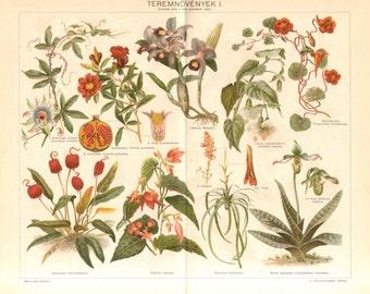 1897 Passion Flower, Pomegranate, Garden Nasturtium, Flamingo Flower, Bolivian Begonia, Lady's-slipper Orchid Antique Chromolithograph