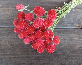 Red Globe Amaranth or Red Gomphrena