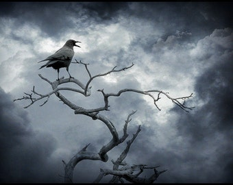 Crow, Bird, Raven, Stormy, Clouds, blue, trees, nature photography, photo print or note cards