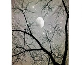 Wall Tapestry. Large Wall Art. Photography. Night Sky Home Decor. Stars Moon Trees. Silver Gray. Dorm Decor. Starry Night. Dreamy