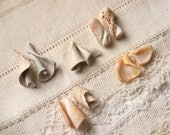 5 pairs (10 pieces) of tiny spiral seashell innards (no.1c)