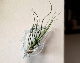Hanging Glass Terrarium , Clear with Blue , Wall Vase , FREE SHIPPING