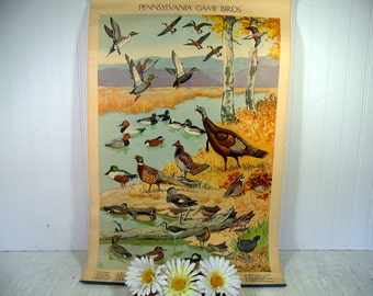 Antique Poster Pennsylvania Game Birds Litho by Jacob Bates Abbott 1946 - First in Series Distributed by the Pennsylvania Game Commission