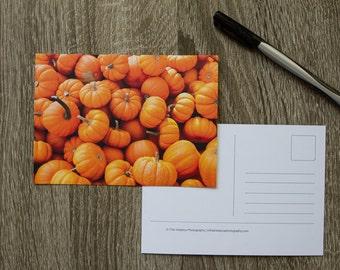 Pumpkins Postcard, Autumn Postcard, Pumpkin Photo Card, Orange Fall Postcard