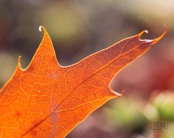 Orange leaf print, Autumn photography, Dried autumn leaves, Nature photography, Fall leaf close up, Rustic home décor, Bright Cabin décor
