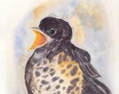 Baby Robin Original Signed Watercolor Painting, original,Robin Arnold, bird,wildlife, nursery wall art,nature,wall art,american robin
