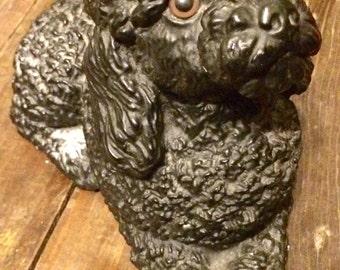 Fifi the ebony french poodle