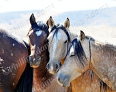 "Bachelors - Mustang Stallions - Gallery Wrapped Canvas - 16"" x 20"""