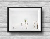 Blue tit bird photo - Alone - minimalist animal photograph, fine art nature print, nursery print, home decor