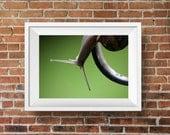 Snail photograph, nature fine art photography, nursery decor, animal print, garden art, Reaching
