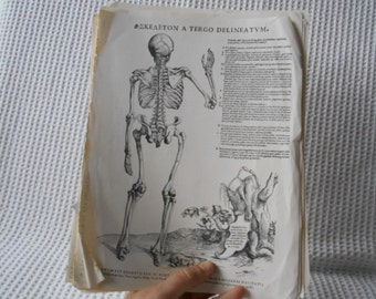 19 Human Body Plates Skeleton Muscles Pages Vintage ephemera Andreas Vesalius